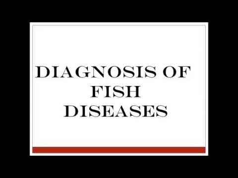 Diagnosis Of Fish Diseases