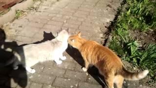 Lustige Katzen Singen Backe Backe Kuchen