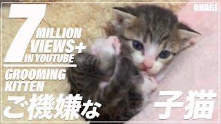 ご機嫌な子猫 thumbnail