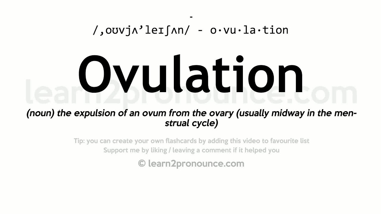 Ovulation Pronunciation And Definition