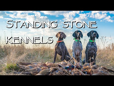 Hunting And Gun Dog Training - Standing Stone Kennels