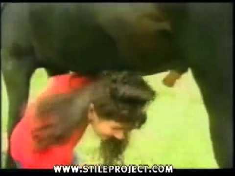 Cavallo fa la cacca sulla testa della giornalista youtube - Donne che vanno in bagno a cagare ...