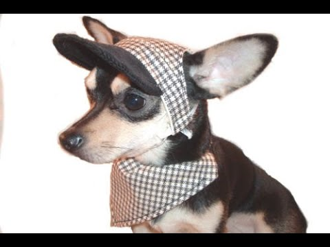 Free Sewing Patterns For Dog Hats