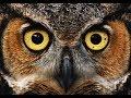 Animal Totem: The Owl