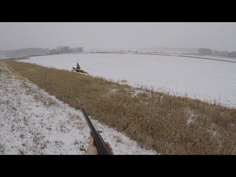 Iowa Pheasant Road Hunt In A Snowstorm