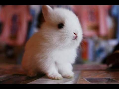 animals adorable baby most 토끼 cute animal