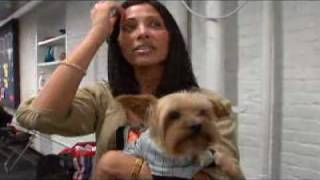 Dogs 101  Yorkshire Terrier