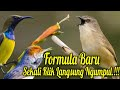 Suara Pikat Burung Bandel  Mp3 - Mp4 Download