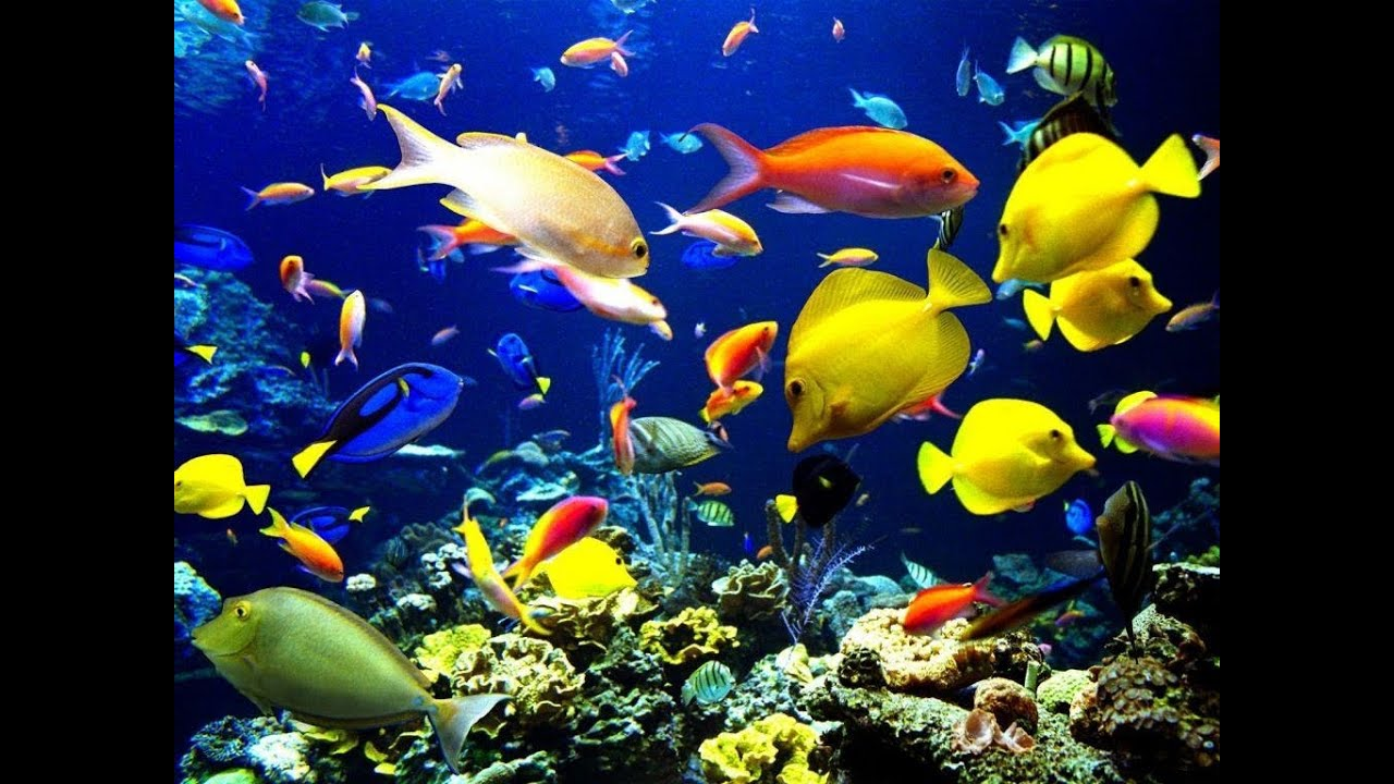Fish Water Tank Aquarium Fresh Water Aqu225rio de 193gua