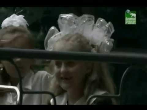 Чернобыль зона отчуждения🔞Шокирующие кадры облученных!