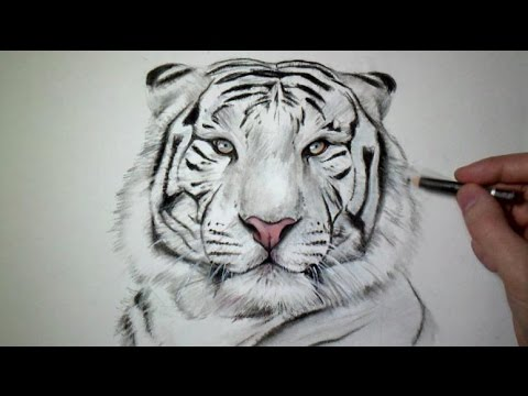 Comment Dessiner Un Tigre Tutoriel Youtube