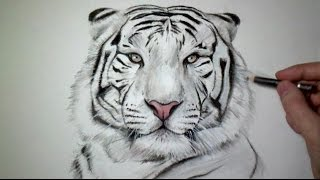 Comment dessiner un tigre tutoriel - Apprendre a dessiner un tigre ...