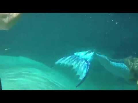 Real Mermaid Melissa sighting
