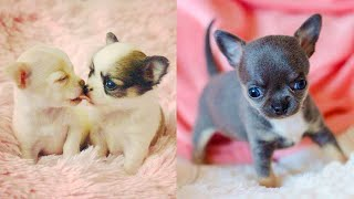 Baby Dogs - Cute and Funny Dog Videos Compilation #29 | Aww Animals