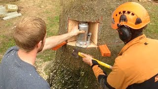 Awesome Fastest Tree Felling Technique, Dangerous Fastest Biggest Tree Felling Cutting Down Chainsaw