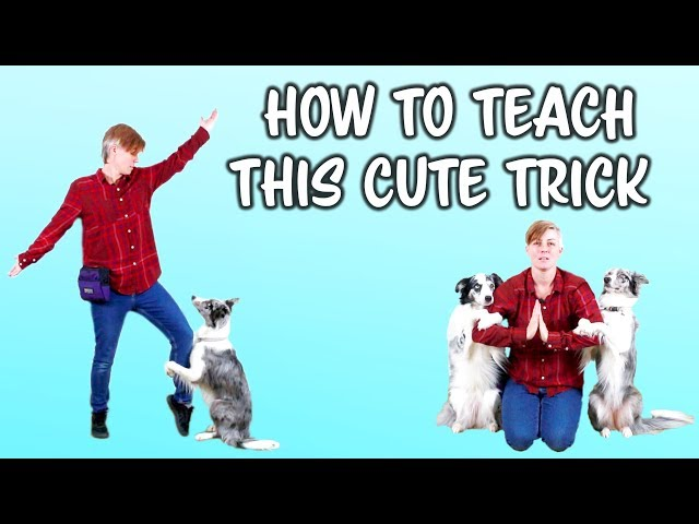 Teach your dog to hug you - dog trick tutorial