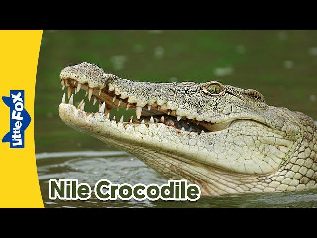 Basic comprehension Nile Crocodile.