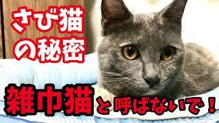 """《保護猫》さび猫の秘密〝雑巾猫""""と呼ばないで!"""