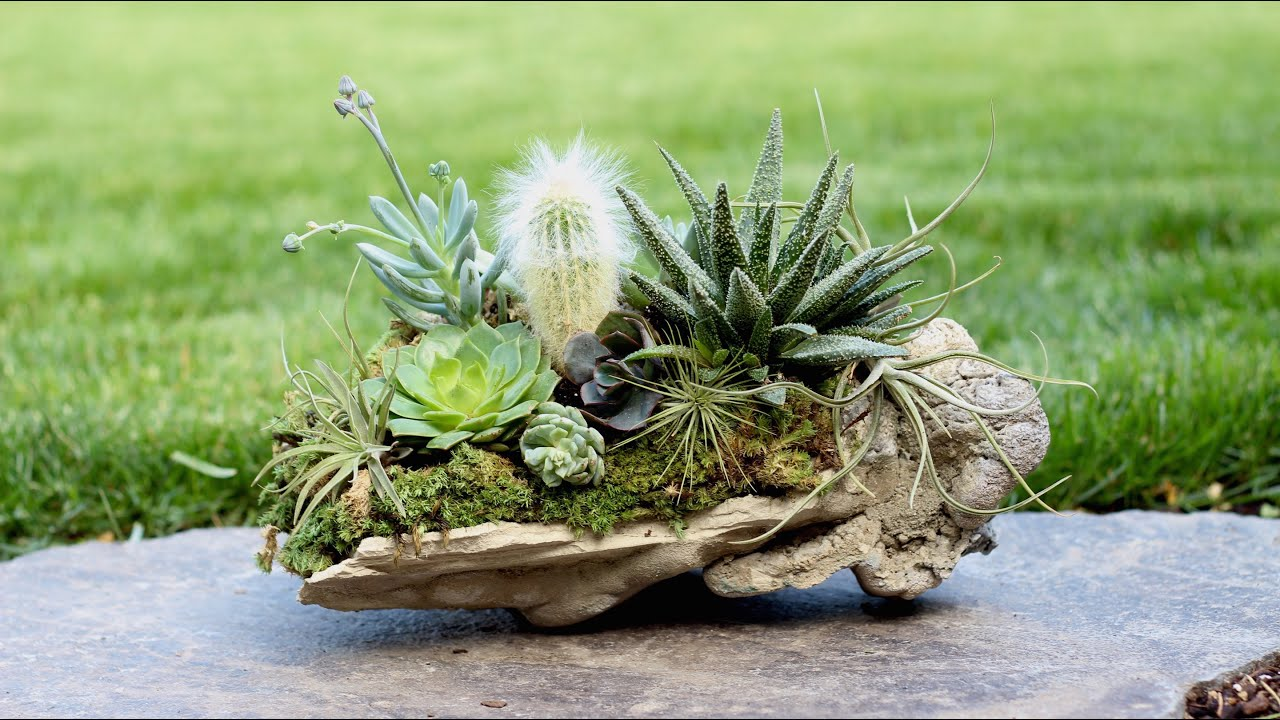 Rock planter w succulents air plants cacti youtube for Air plant planters