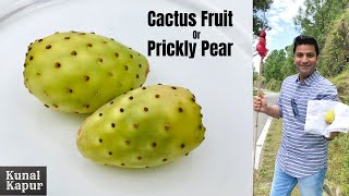 Cactus Fruit, नागफनी Prickly Pear How to cut & Eat | कैक्टस कैसे काटते खाते हैं Kunal Kapur Recipes