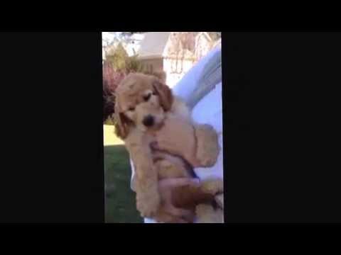 Albert the Einstein Academy Puppy!