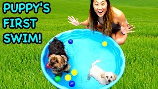 TEACHING MY PUPPY HOW TO SWIM!!