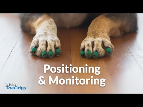 Positioning Monitoring Dr Buzby S Toegrips For Dogs Youtube