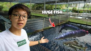 Feeding Arapaimas and Catfish that are BIGGER than Me!