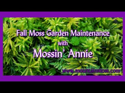 Fall Moss Garden Maintenance with Mossin' Annie