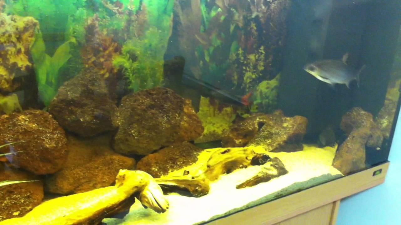 my tropical fish tank community tank 400 litre juwel rio. Black Bedroom Furniture Sets. Home Design Ideas