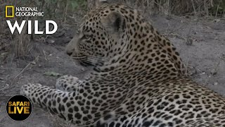 Safari Live - Day 373 Nat Geo Wild