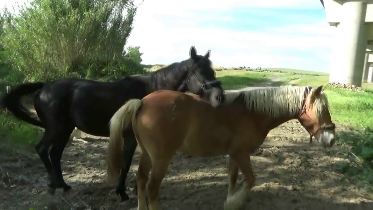 Liberty Forage Walk With 2 Horses And A Donkey