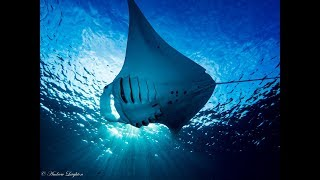 Scuba Diving the incredible Blue Waters of Palau with Solitude One.