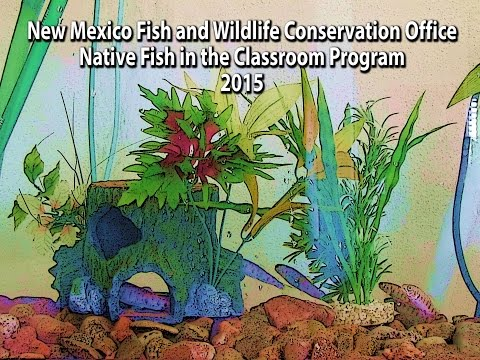New Mexico Fish And Wildlife Conservation Office Native Fish In The Classroom 2015