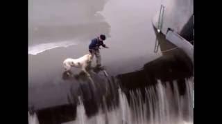 Рискованное спасение собаки.  Добрый поступок.  Уважение мужику!