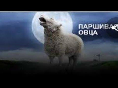 Паршивая овца момент из фильма