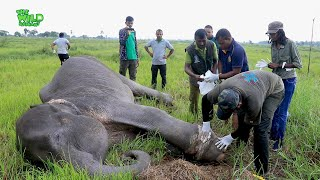 Animals' faith in Humanity! - Freeing a giant elephant from a Cable Trick