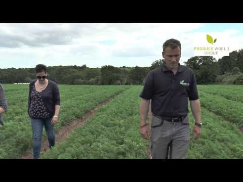 Produce World Organic Carrot Grower James Foskett