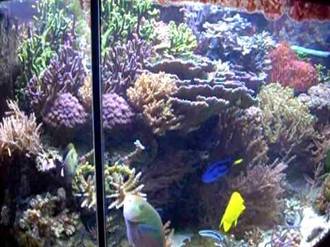 Aqua Medic Percula 120, Meerwasseraquarium, Reef tank, Corals, SPS ...