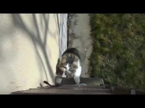 Lustiges Katzen Video zum totlachen | Witzige Katzen | 2015 HD