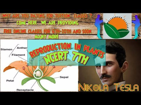 Reproduction in plants Class 7 NCERT Solutions in (hindi+english ) Get 100/100 with GUARANTEE