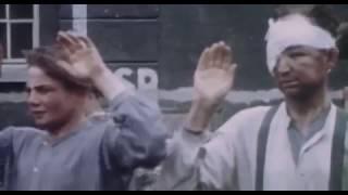 цветные ужасы второй мировой войны