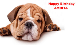 Amrita - Dogs Perros - Happy Birthday