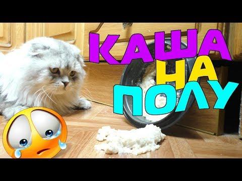 Короче говоря, Кева приготовил кашу | котик Кевин | видео для детей