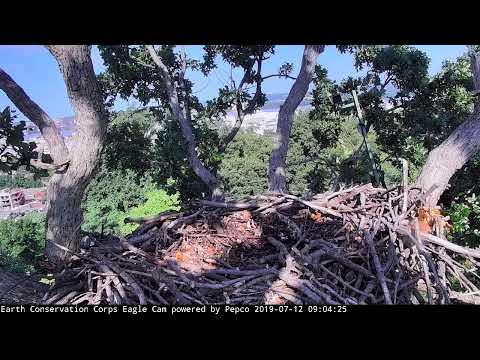 Zack & Jim - Live Eagle Cam.