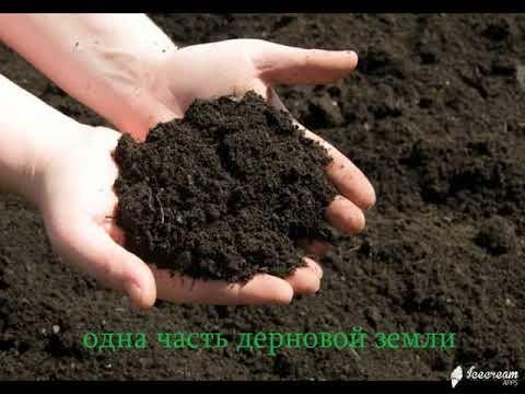 почва для фикуса