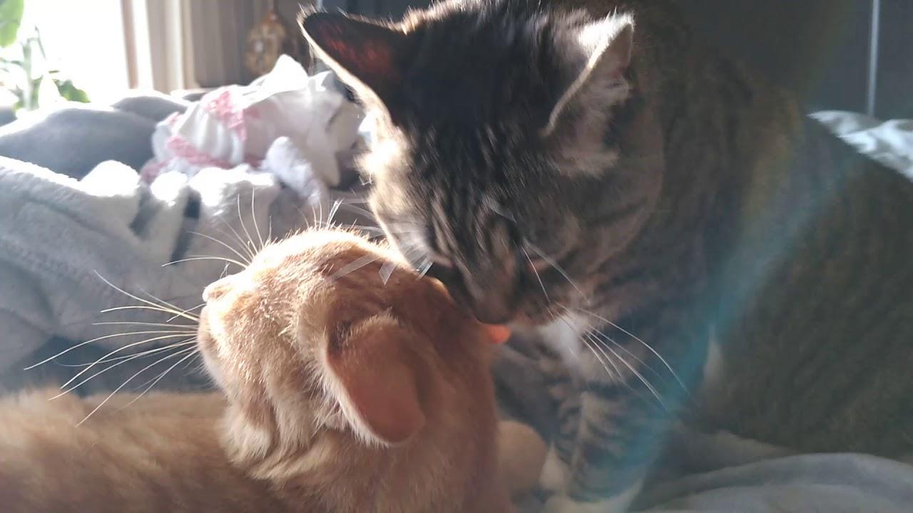 licking-pussy-girls-gifs