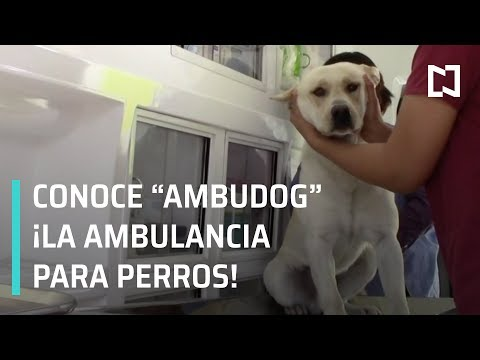 Ambulancia para perros en San Luis Potosí - Las Noticias