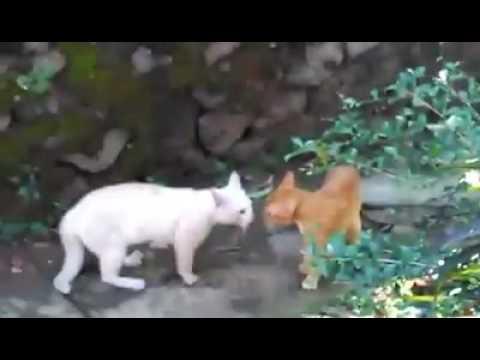 Cat vs Cat Street Fight