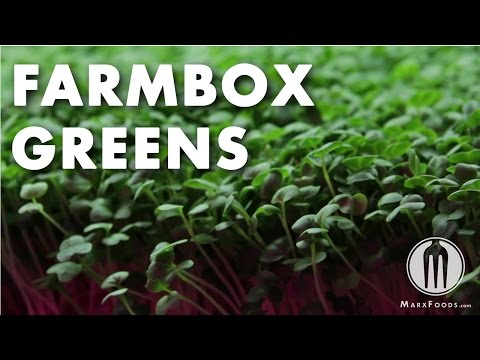 Farmbox Greens Product Spotlight Video